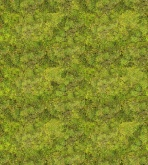 Daily Details - Green Carpet